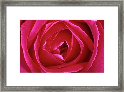 Deep Pink Rose Abstract Framed Print by Nigel Downer