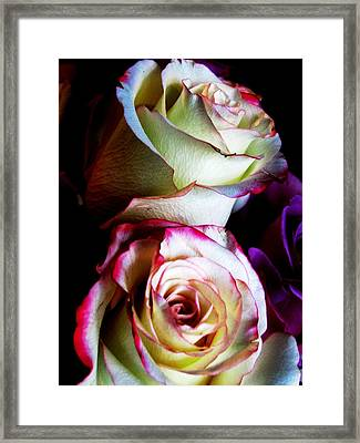 Deep Pink Framed Print by Will Boutin Photos