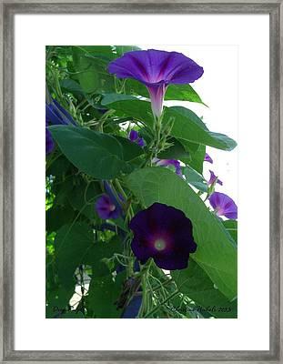 Deep Purple Morning Framed Print