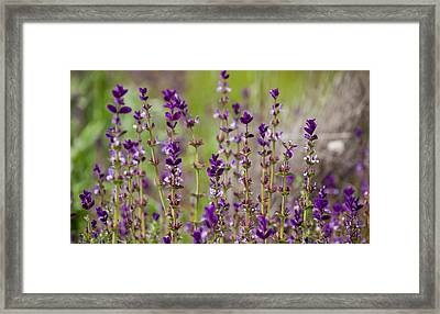 Framed Print featuring the photograph Deep Purple by Uri Baruch
