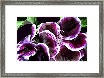 Deep Purple Vibrant Flower Macro Framed Print by Danielle  Parent