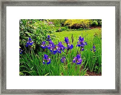 Deep Purple Framed Print