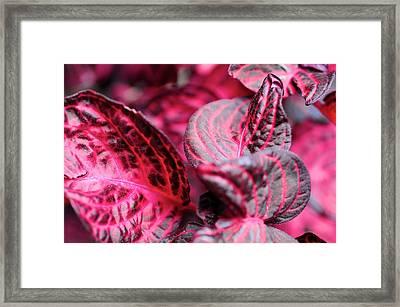 Deep Red Framed Print by Max Ratchkauskas