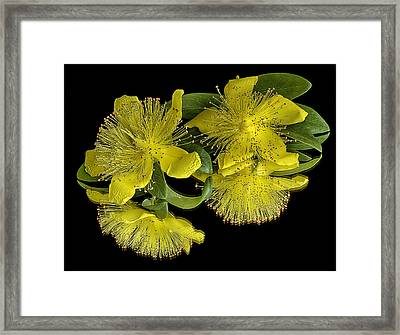 Deep Reflections Framed Print