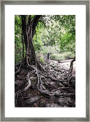 Deep Rooted Framed Print