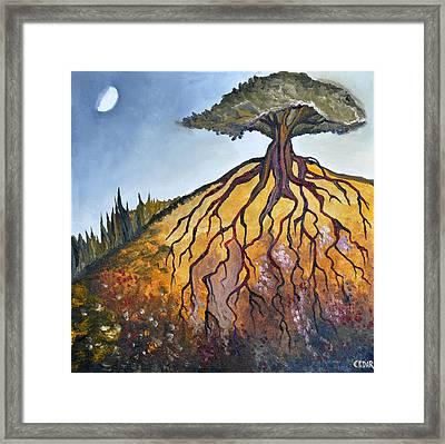 Deep Roots Framed Print by Cedar Lee