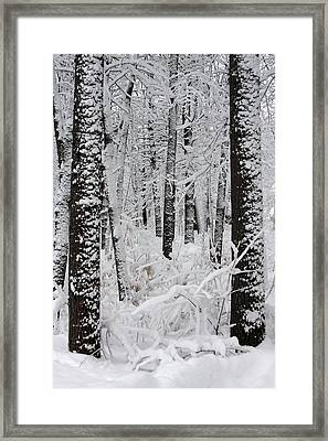 Deep Snow In The Forest Framed Print by Lynn-Marie Gildersleeve