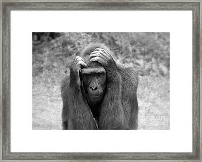 Deep Thoughts Framed Print by Lisa L Silva