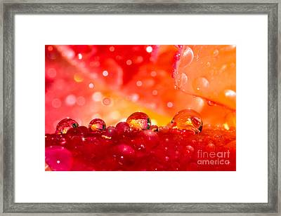 Deep Within A Rose Framed Print