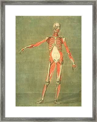 Deeper Muscular System Of The Front Framed Print by Arnauld Eloi Gautier D'Agoty