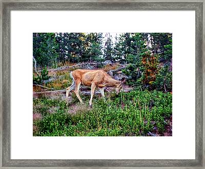 Framed Print featuring the photograph Deer 1 by Dawn Eshelman
