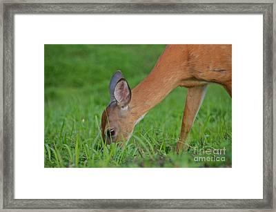 Deer 25 Framed Print