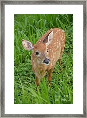 Deer 42 Framed Print