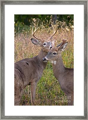 Deer 48 Framed Print