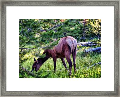 Framed Print featuring the photograph Deer 7 by Dawn Eshelman