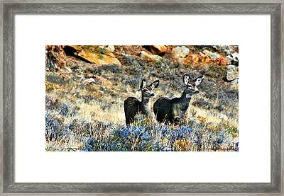 Deer Alert Framed Print by Rebecca Adams