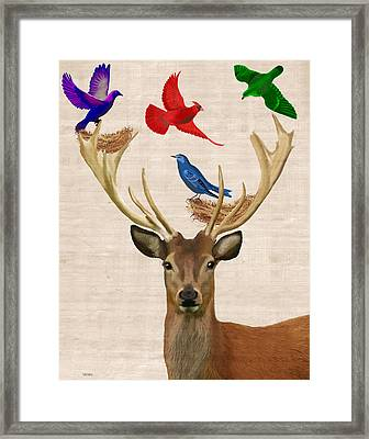 Deer And Birds Nests Framed Print
