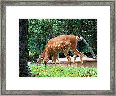 Deer And Fawn Framed Print by Adam L