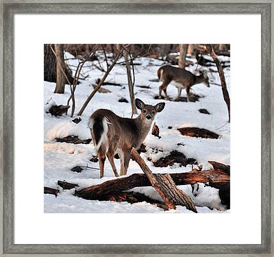 Deer And Snow Framed Print