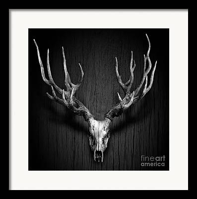 Antler Framed Prints