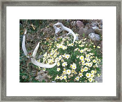 Framed Print featuring the photograph Deer Antler Two by J L Zarek