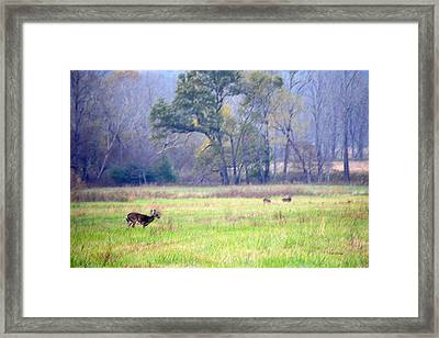 Framed Print featuring the photograph Deer At Cades Cove by Kenny Francis