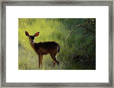 Deer At Home Away From Home Framed Print