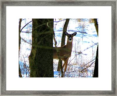 Framed Print featuring the photograph Deer At Park by Eric Switzer