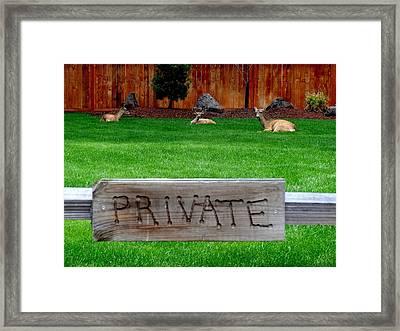 Deer At Rest Framed Print