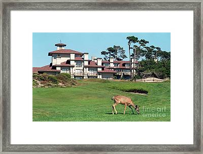 Deer At Spanish Bay Framed Print