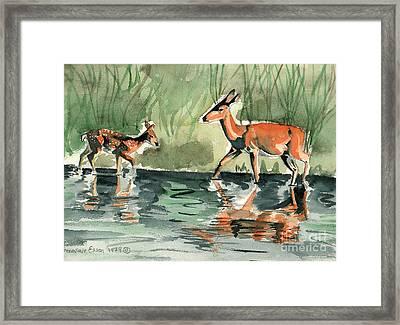Deer At The River Framed Print
