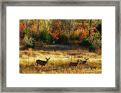 Deer Autumn Framed Print