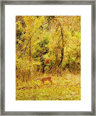 Deer Autumn Framed Print