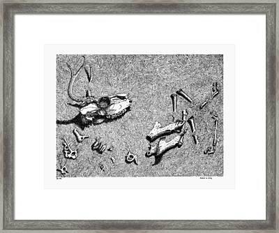 Deer Bones Framed Print by Daniel Reed