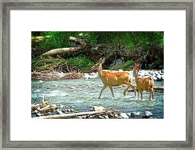 Deer Crossing Framed Print by Cheryl Cencich