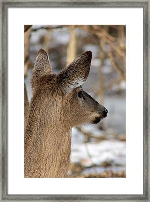 Deer Day Dreamer Framed Print
