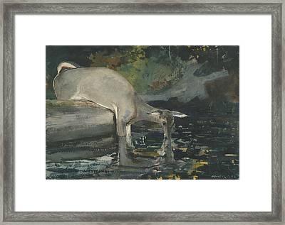 Deer Drinking Framed Print by Celestial Images