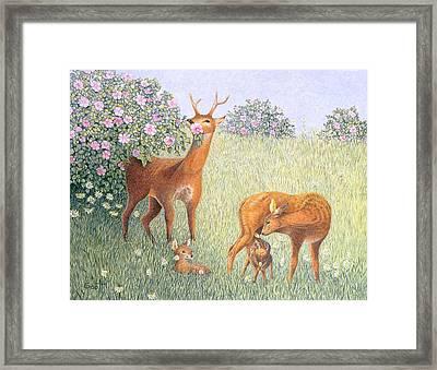 Deer Family Oil On Canvas Framed Print by Pat Scott