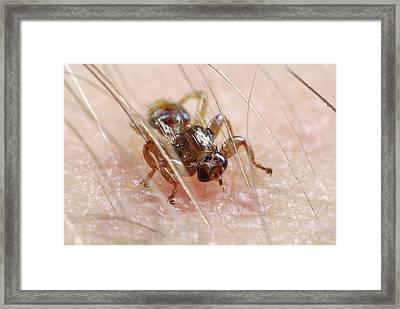 Deer Fly Framed Print
