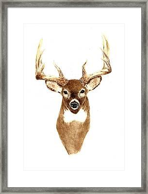 Deer - Front View Framed Print