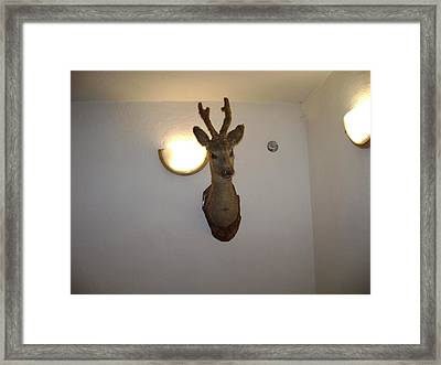 Deer Head Framed Print