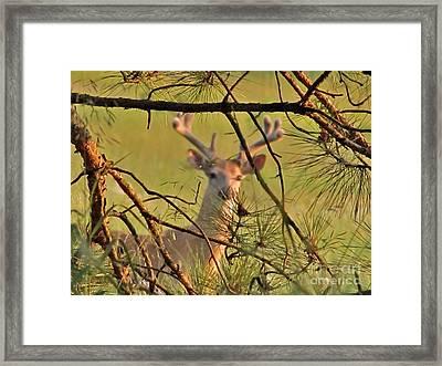 Deer Hunters' Fantasy Framed Print by Marilyn Smith