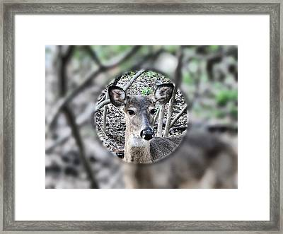 Deer Hunter's View Framed Print