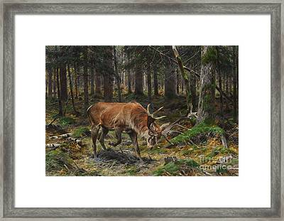 Deer In A Forest Glade Framed Print by Celestial Images