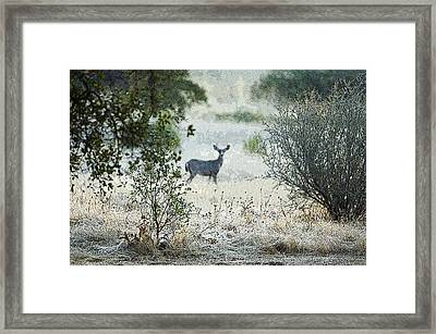 Framed Print featuring the photograph Deer In A Meadow by Sherri Meyer