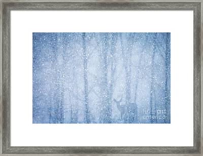 Deer In A Snowy Forest Framed Print