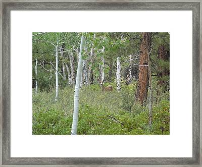 Deer In Forest Framed Print