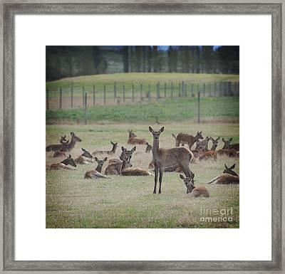 Deer In Grass Framed Print