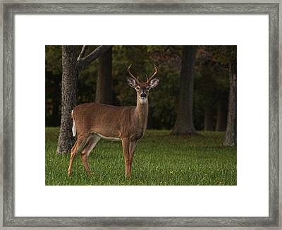 Framed Print featuring the photograph Deer In Headlight Look by Tammy Espino