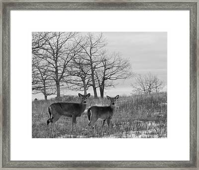 Deer In Meadow Framed Print